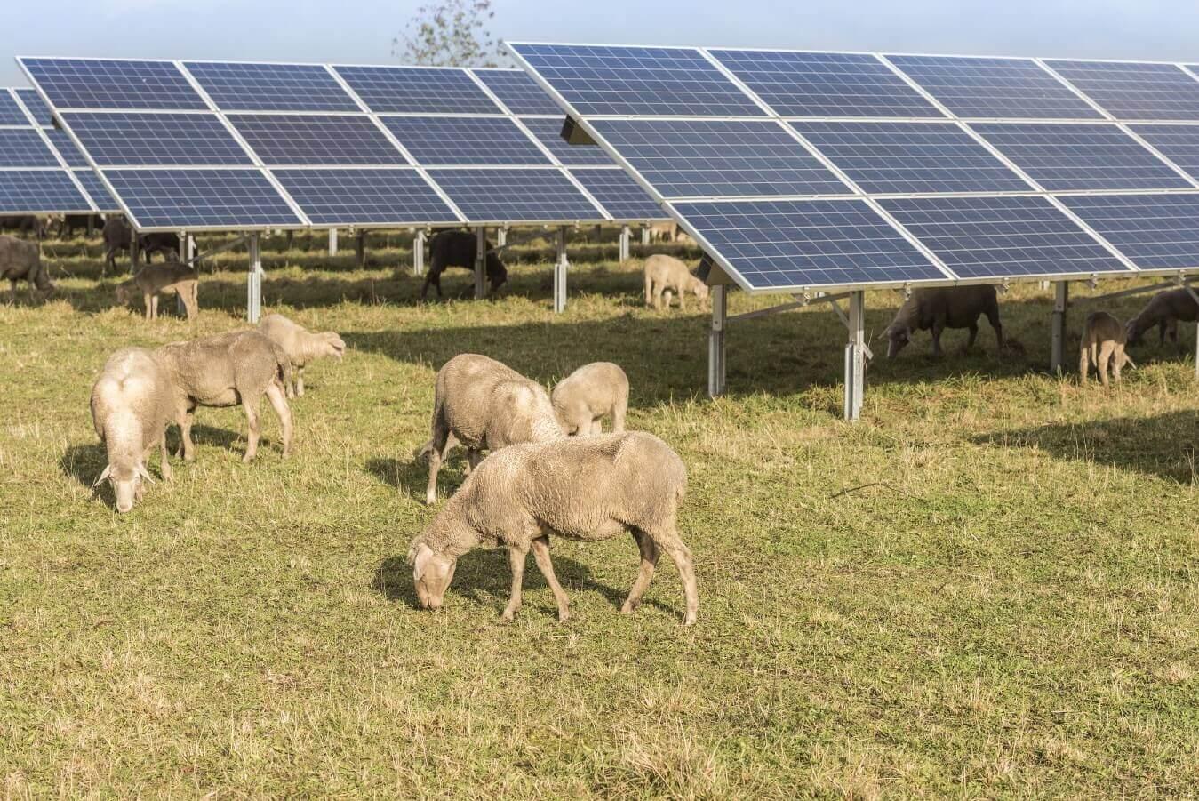 Nachhaltigkeit Solarparks